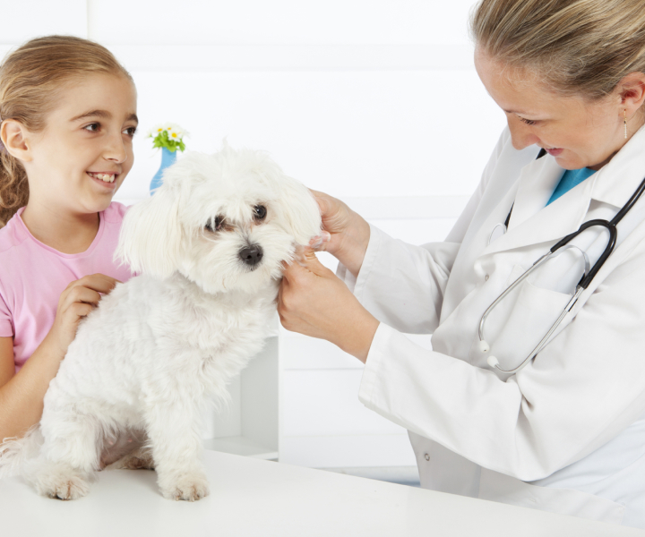 Young girl with poodle and vet