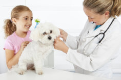 Vet with a young girl and a small dog